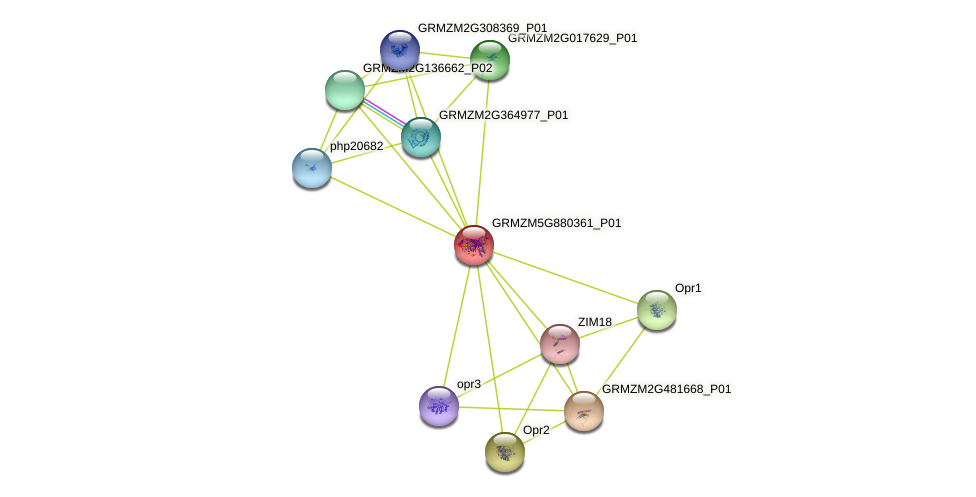 GRMZM5G880361_P01 protein (Zea mays) - STRING interaction network