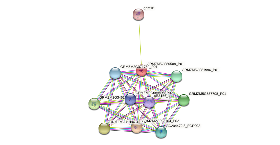 GRMZM5G880508_P01 protein (Zea mays) - STRING interaction network