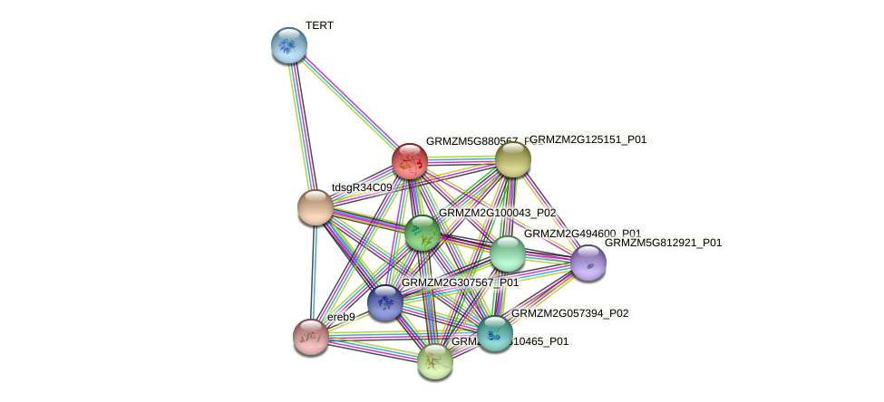 GRMZM5G880567_P01 protein (Zea mays) - STRING interaction network