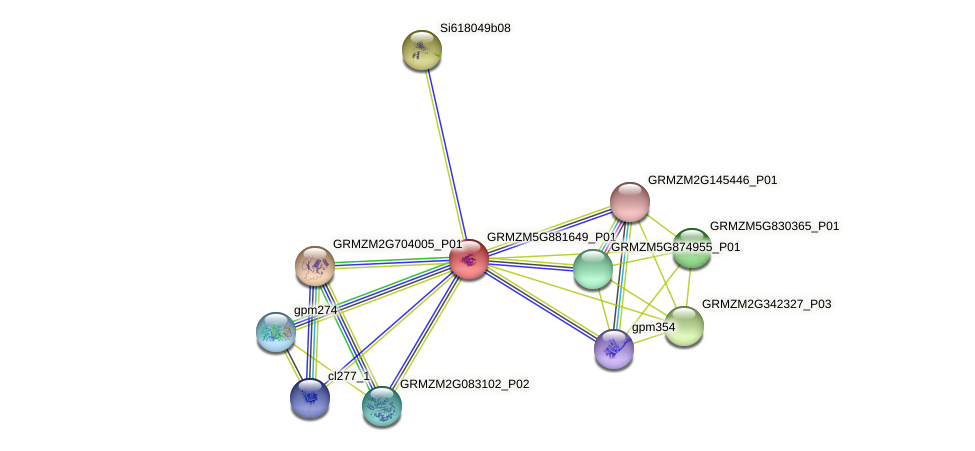 GRMZM5G881649_P01 protein (Zea mays) - STRING interaction network