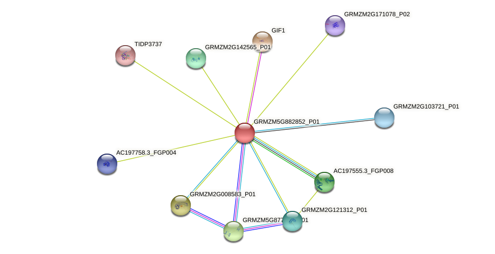 GRMZM5G882852_P01 protein (Zea mays) - STRING interaction network