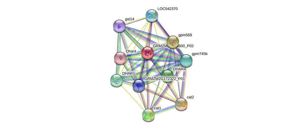GRMZM5G884600_P02 protein (Zea mays) - STRING interaction network