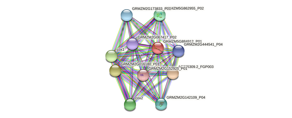 GRMZM5G884912_P01 protein (Zea mays) - STRING interaction network