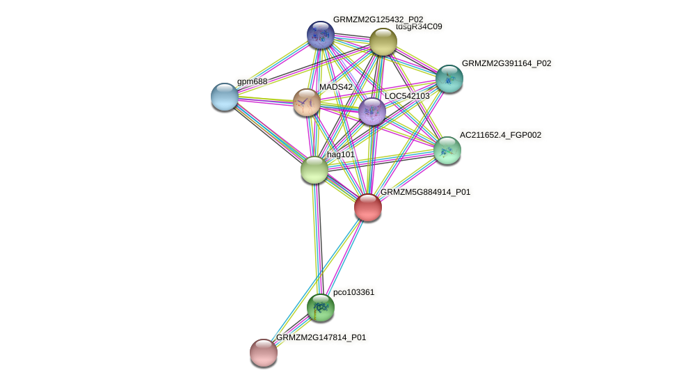 GRMZM5G884914_P01 protein (Zea mays) - STRING interaction network