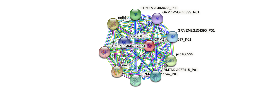 GRMZM5G886257_P01 protein (Zea mays) - STRING interaction network