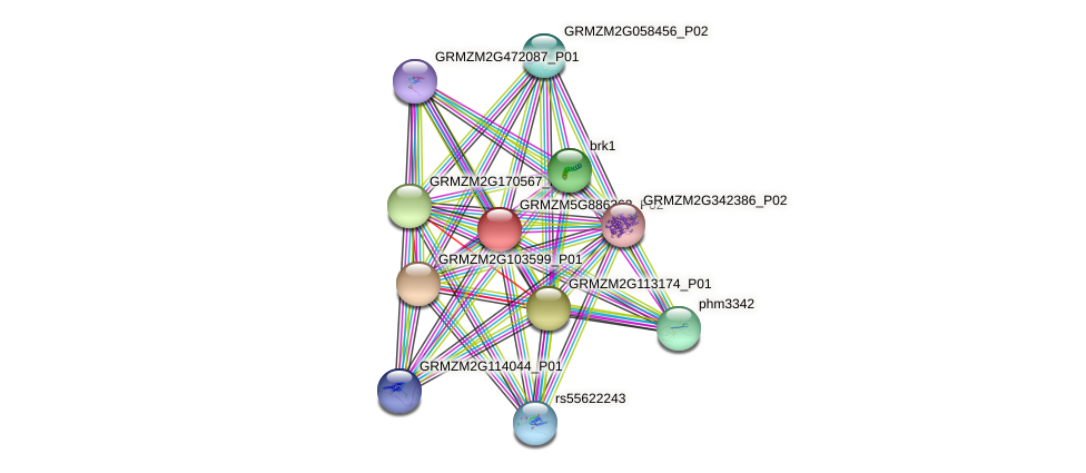 Zm.5783 protein (Zea mays) - STRING interaction network