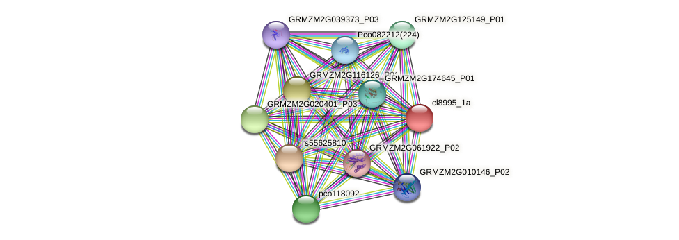 cl8995_1a protein (Zea mays) - STRING interaction network