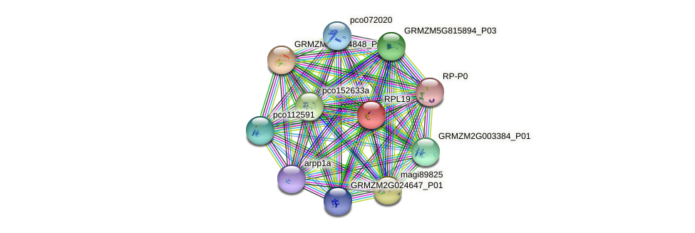 RPL19 protein (Zea mays) - STRING interaction network