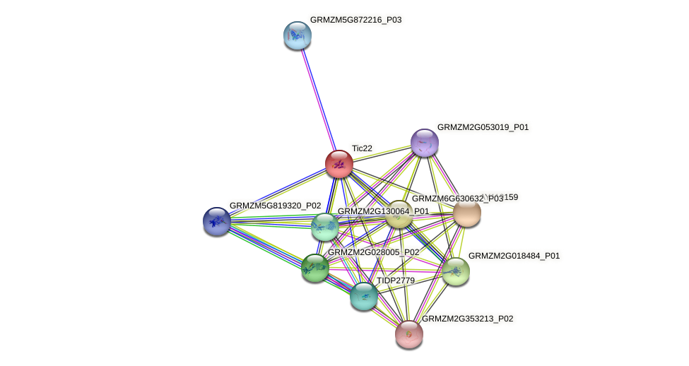 GRMZM5G887716_P01 protein (Zea mays) - STRING interaction network