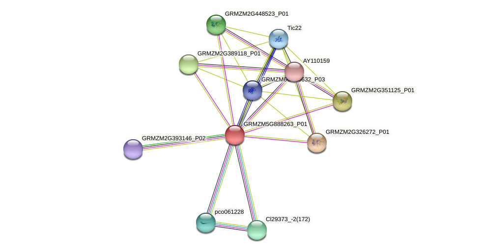 GRMZM5G888263_P01 protein (Zea mays) - STRING interaction network