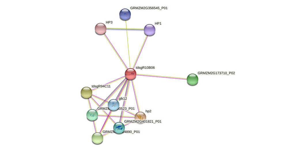 GRMZM5G889152_P01 protein (Zea mays) - STRING interaction network