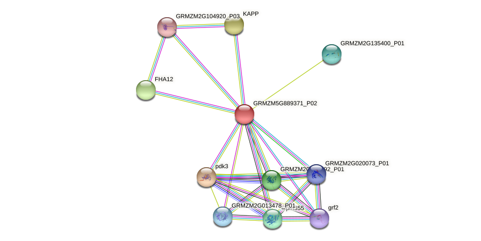 GRMZM5G889371_P02 protein (Zea mays) - STRING interaction network