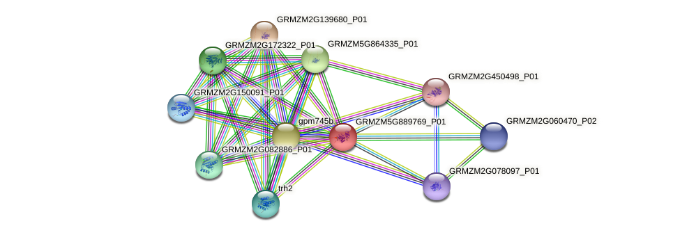 GRMZM5G889769_P01 protein (Zea mays) - STRING interaction network