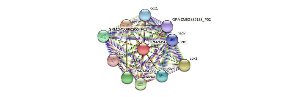 GRMZM5G889905_P01 protein (Zea mays) - STRING interaction network