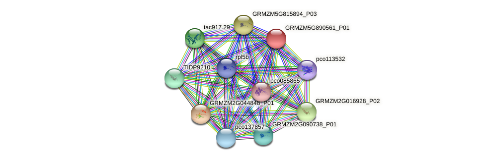 GRMZM5G890561_P01 protein (Zea mays) - STRING interaction network