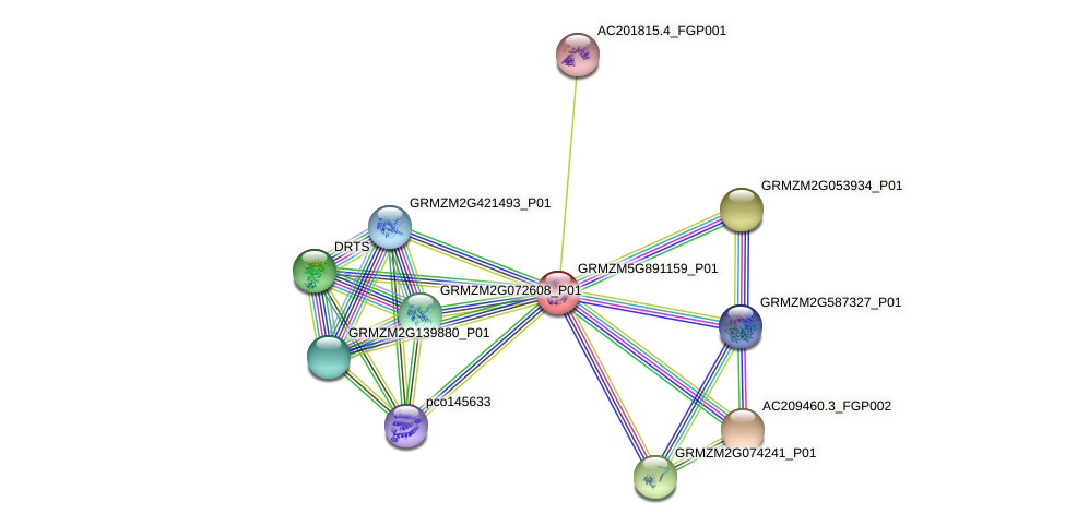 GRMZM5G891159_P01 protein (Zea mays) - STRING interaction network