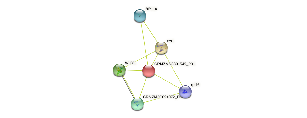 ycf15-B protein (Zea mays) - STRING interaction network