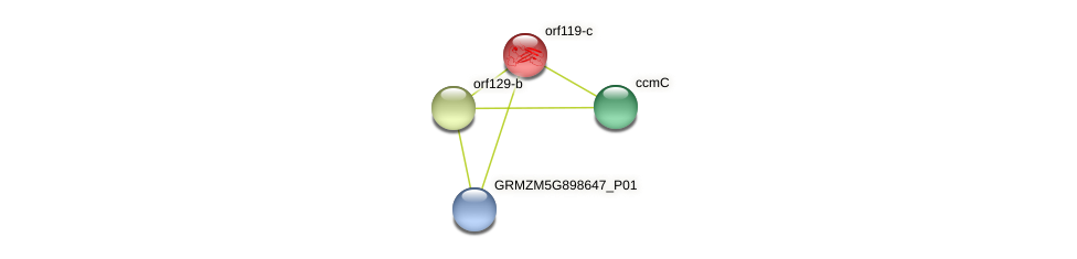 orf119-c protein (Zea mays) - STRING interaction network