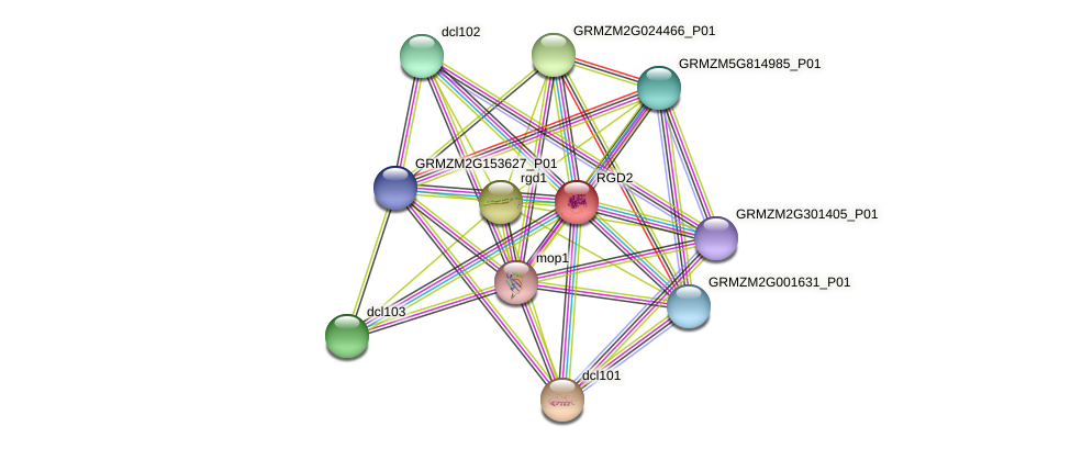 RGD2 protein (Zea mays) - STRING interaction network
