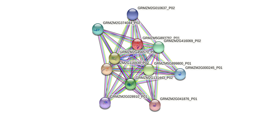 GRMZM5G893782_P01 protein (Zea mays) - STRING interaction network