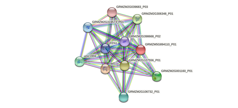 GRMZM5G894110_P01 protein (Zea mays) - STRING interaction network
