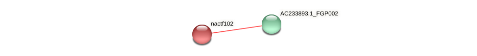 NAC102 protein (Zea mays) - STRING interaction network