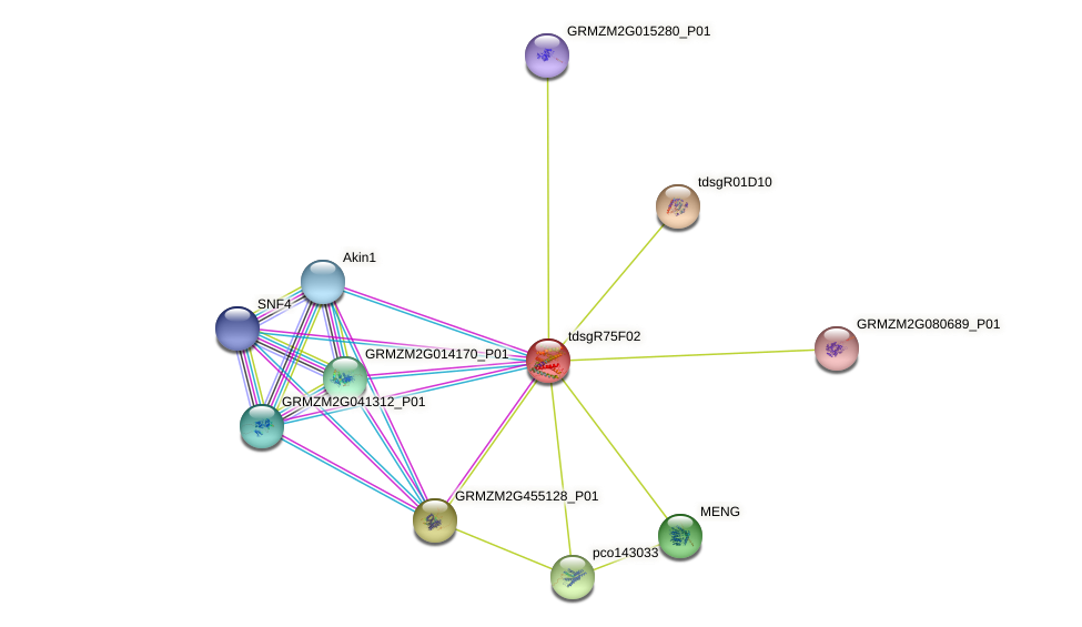 GRMZM5G894432_P01 protein (Zea mays) - STRING interaction network