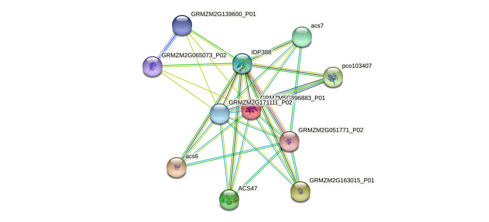 GRMZM5G896883_P01 protein (Zea mays) - STRING interaction network