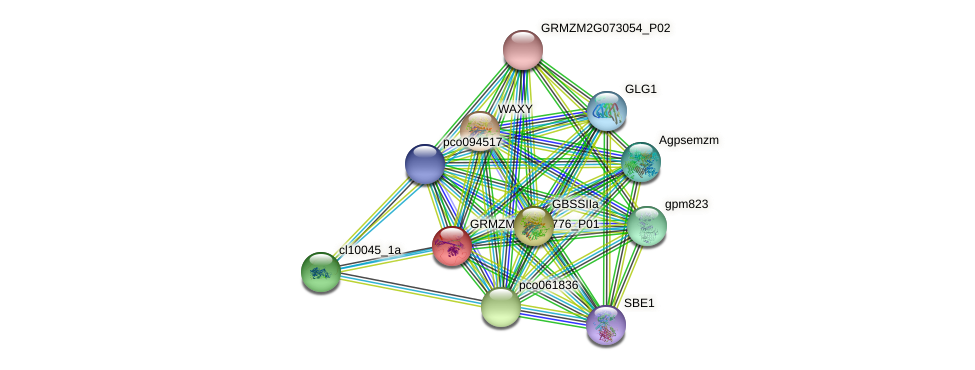 GRMZM5G897776_P01 protein (Zea mays) - STRING interaction network