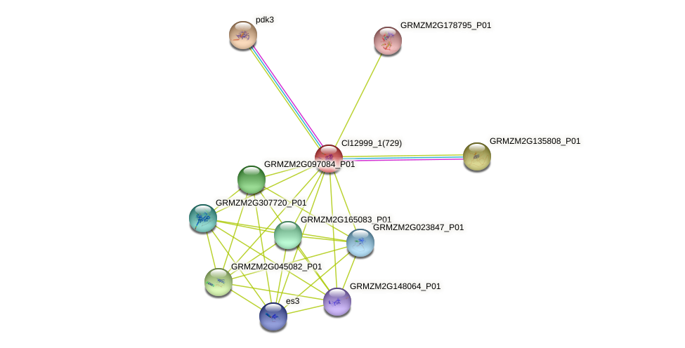 GRMZM5G897958_P01 protein (Zea mays) - STRING interaction network