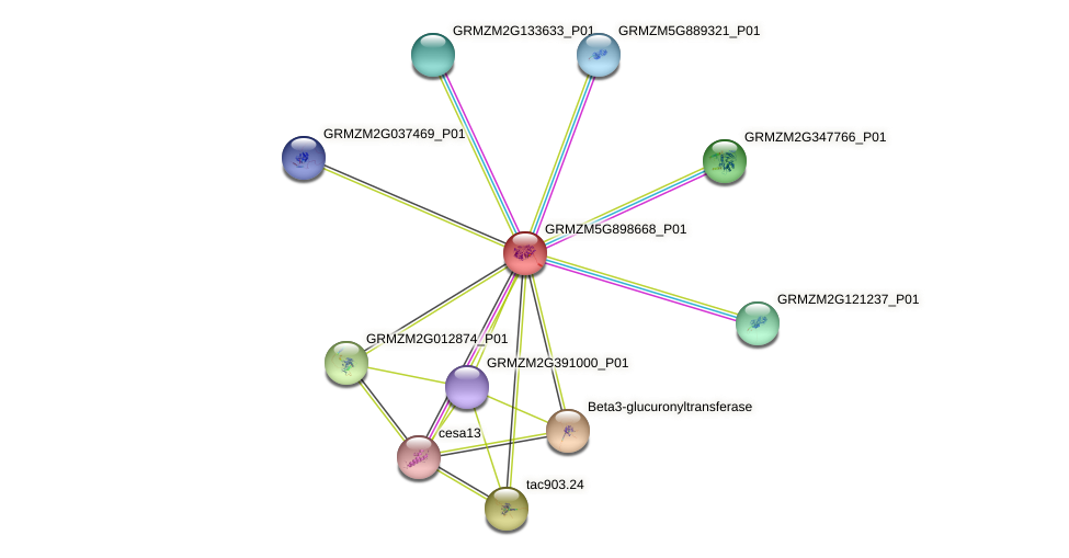 GRMZM5G898668_P01 protein (Zea mays) - STRING interaction network