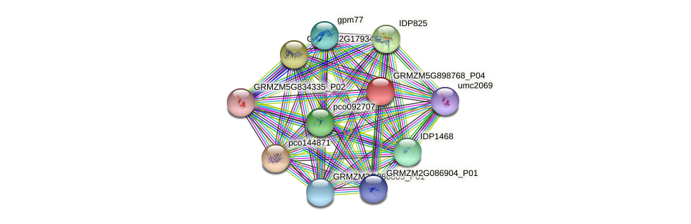 100285329 protein (Zea mays) - STRING interaction network