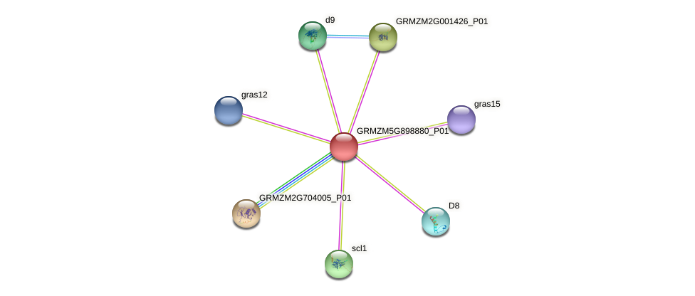 GRMZM5G898880_P01 protein (Zea mays) - STRING interaction network