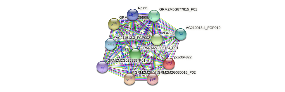 pco064822 protein (Zea mays) - STRING interaction network