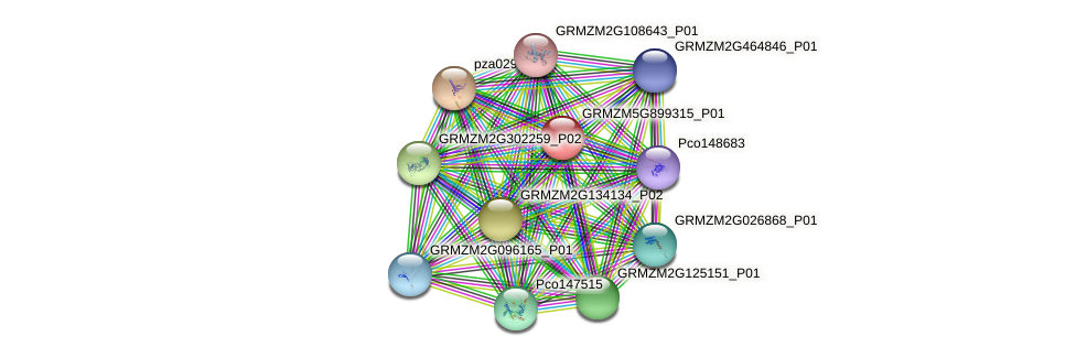 GRMZM5G899315_P01 protein (Zea mays) - STRING interaction network