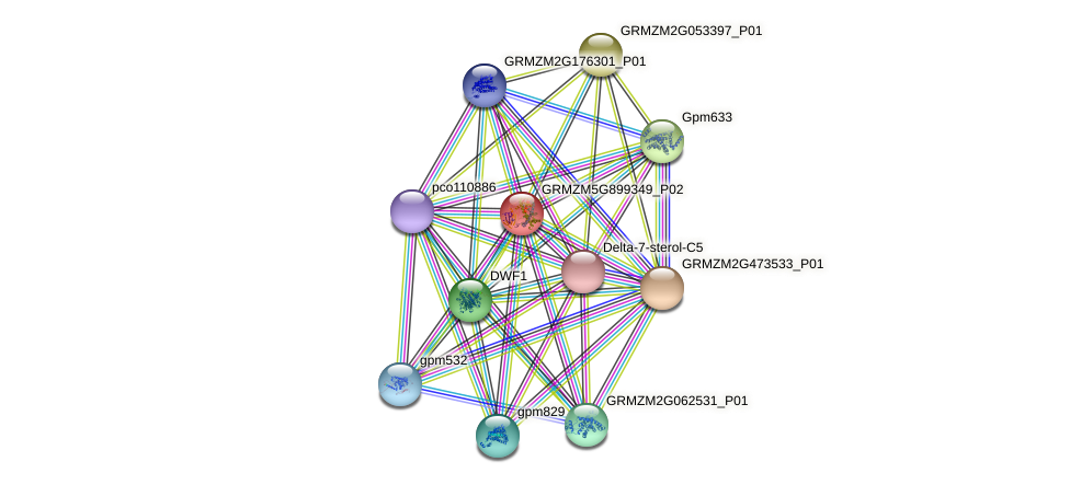 cyp1 protein (Zea mays) - STRING interaction network