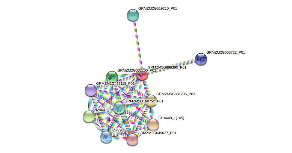 GRMZM5G899390_P01 protein (Zea mays) - STRING interaction network