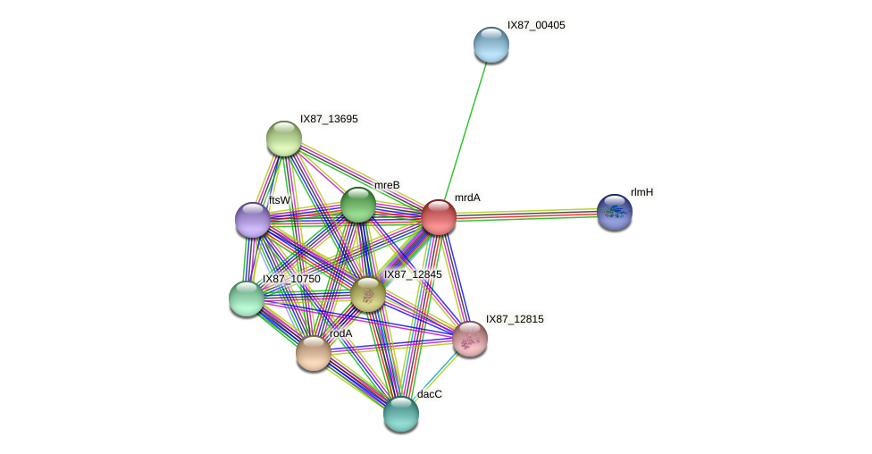 AIL77142.1 protein (Acinetobacter baumannii) - STRING interaction network