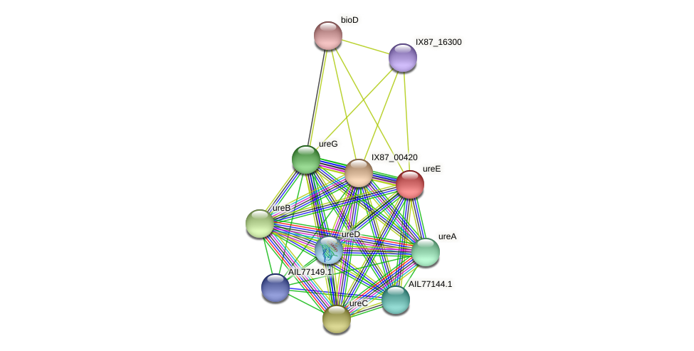AIL77147.1 protein (Acinetobacter baumannii) - STRING interaction network