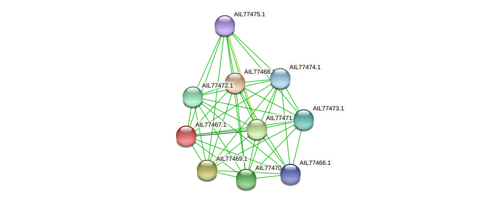 AIL77467.1 protein (Acinetobacter baumannii) - STRING interaction network