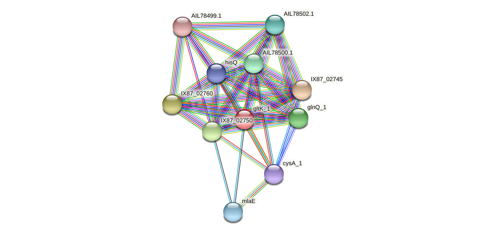AIL77584.1 protein (Acinetobacter baumannii) - STRING interaction network