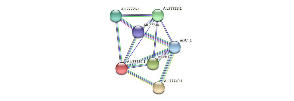 AIL77739.1 protein (Acinetobacter baumannii) - STRING interaction network