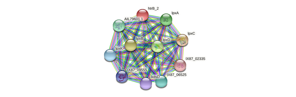 lpxL protein (Acinetobacter baumannii) - STRING interaction network
