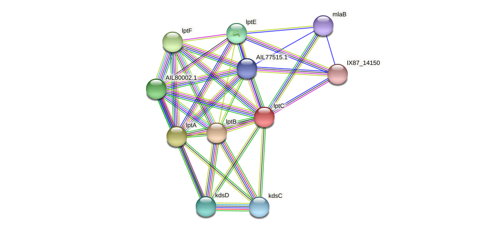lptC protein (Acinetobacter baumannii) - STRING interaction network
