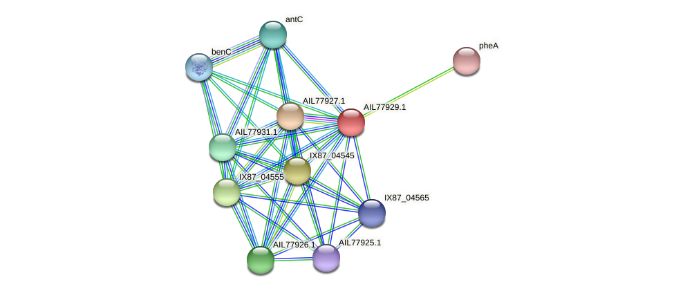 AIL77929.1 protein (Acinetobacter baumannii) - STRING interaction network