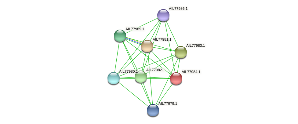 AIL77984.1 protein (Acinetobacter baumannii) - STRING interaction network