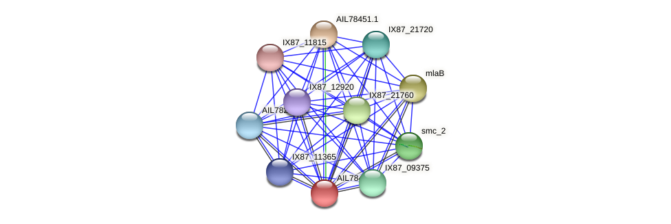 AIL78452.1 protein (Acinetobacter baumannii) - STRING interaction network