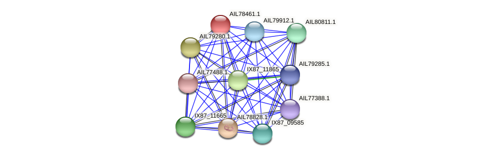 AIL78461.1 protein (Acinetobacter baumannii) - STRING interaction network