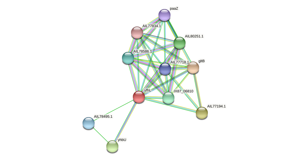 AIL78497.1 protein (Acinetobacter baumannii) - STRING interaction network