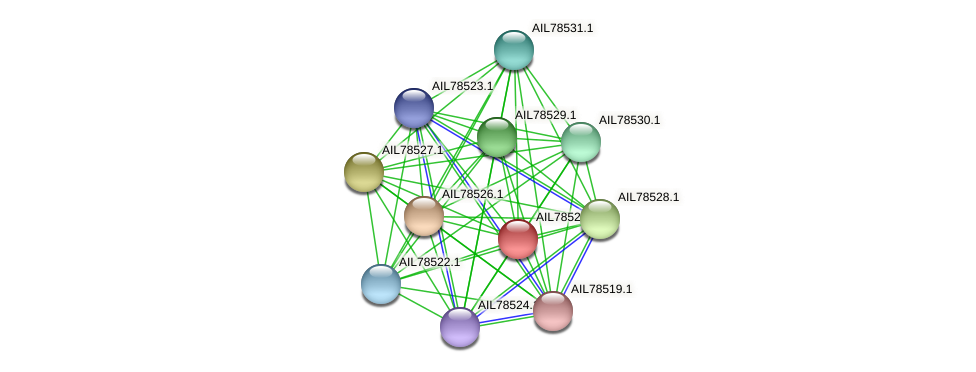 AIL78525.1 protein (Acinetobacter baumannii) - STRING interaction network